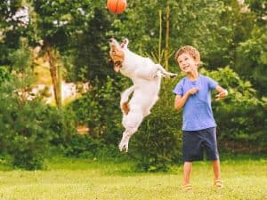 dog jumping with kid