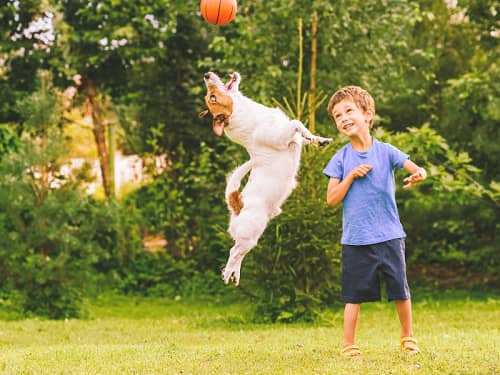 How To Make The most Out Of Best Dog Sports For All Ages