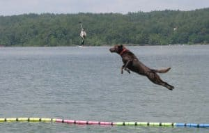 dog water sport