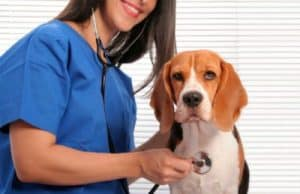 guarding your dog's health