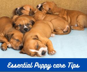 essential puppy care
