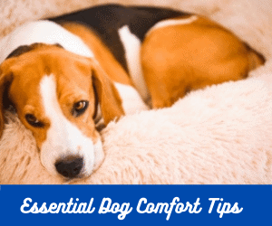 dog comfort tips